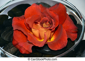 Single red rose in glass dish