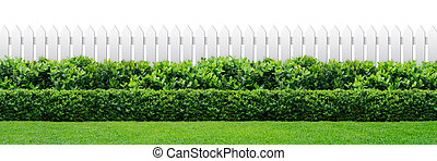 white fence and hedge - white fence and green hedge on white...