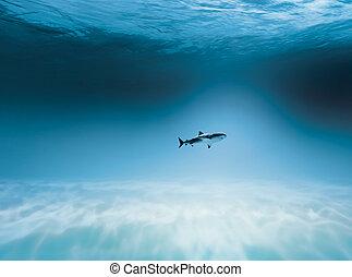 鯊魚, 打獵