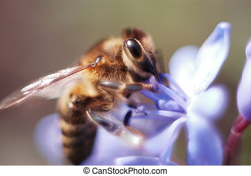 Extreme close-up of a bee on a flower