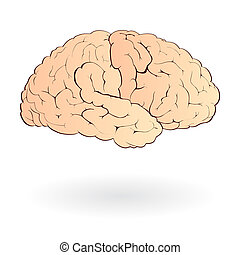 Brain isolated - Illustration of human brain isolated