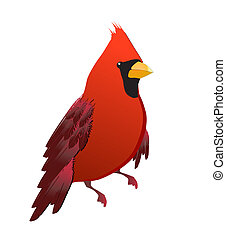 Red cardinal bird isolated - Cute red cardinal bird...