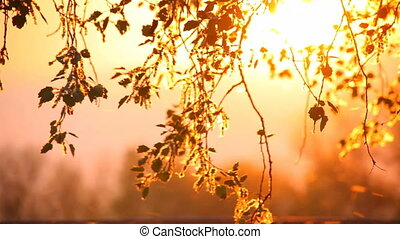 Pollen and tree leaves on the wind