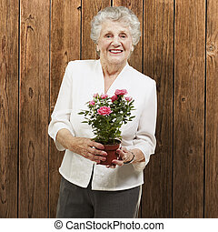 senior woman holding a flower pot against a wooden...