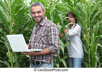 Sweetcorn farmers