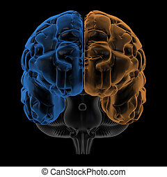 Hemispheres of brain, front view - 3D Rendering of the two...
