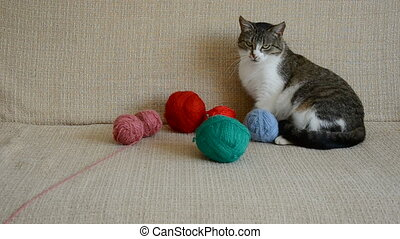 cat playing with threads balls