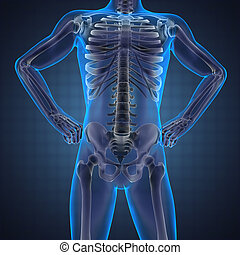 humano, radiografía, exploración