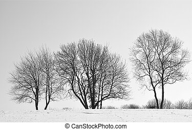 Winter Trees - Skeletal Winter Trees in Snow