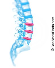 highlighted vertebrae - 3d rendered medical illustration -...