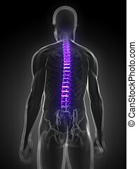 highlighted human spine - 3d rendered medical illustration -...