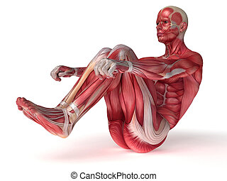 Males muscles anatomy - 3d rendered scientific illustration...