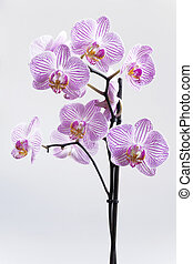 Branch of orchid with gentle flowers on a light background