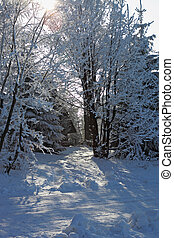 Sunny winter morning. Rolled snowy trails in mountains -...