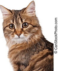 Portrait of cat - Portrait of pretty young cat over white...