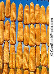 corn in row