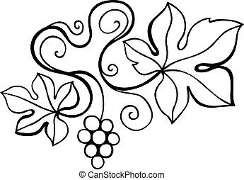 Vine design element on white background