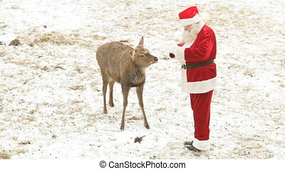 Santa feeding deer - Santa Claus feeding deer and stroking...