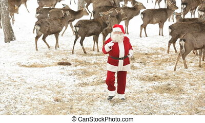 Santa with deer - Santa Claus having fun and dancing amongst...