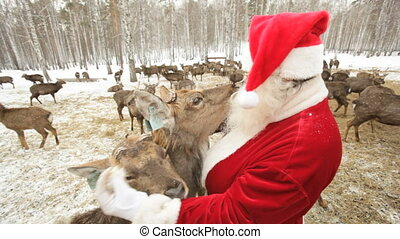 Deer all around - Santa surrounded by deer trying to feed...