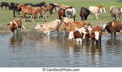 farm scene with animals on river