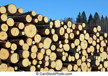 Pine Timber Logs - Stack of freshly cut pine logs on a clear...