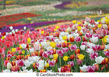 Spring flowers background - Field of bright colorful spring...