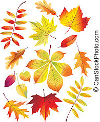 Autumn Leaves - Autumn leaves on white background Vector...