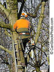 pruning trees, lumberjack amount in a tree to cut branches