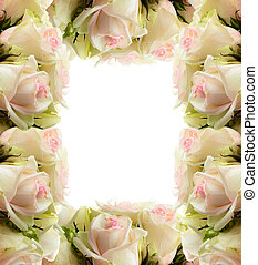 White roses frame border isolated on white background
