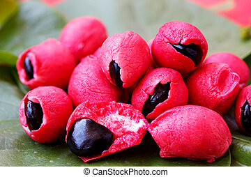 Fleshy and pulpy Mexican origin fruit - Camachile - Fleshy...