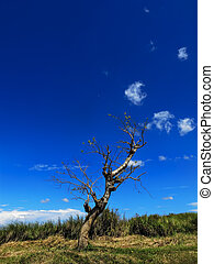 Lone Tree - Lone tree on a slope against blue sky