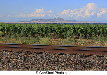 Sutter Buttes, Vineyard and tracks