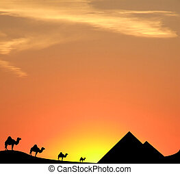 Egypt sunset - camels, pyramids and sand dunes silhouetted...