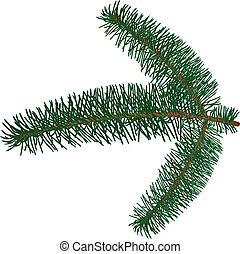 Fur-tree branch - Vector image fur-tree branch