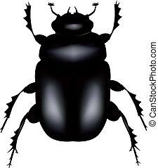 beetle - Scarab beetle