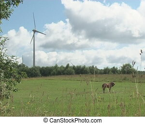 horse grazing windmill