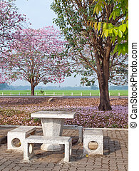 Pink trumpet tree blooming in countryside with marble table...