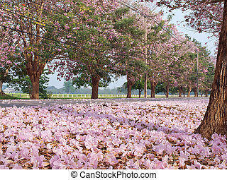 Pink trumpet tree blooming in countryside with roadTabebuia...