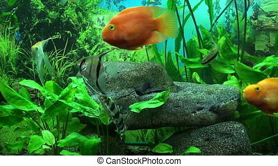 Aquarium - Beautiful aquarium with gold fish