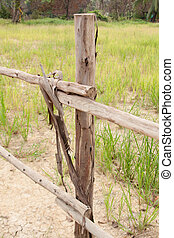 Palisade - Wooden fence, grass and wood fence around the...