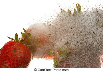 Mouldy Strawberry - Mouldy strawberry is unhealthy to eat