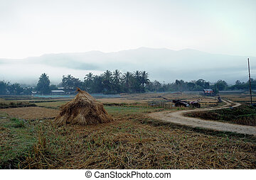 Morning in rural rice fields.