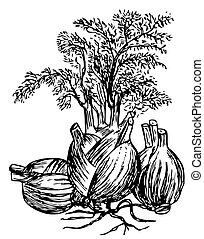 Fennel (Finocchio) - Bush of fennel with leaves on white...