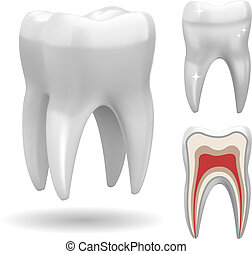 Excellent Vector Tooth - Isolated three-dimensional tooth,...