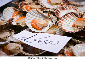 Scallops for sale at the Rialto market in Venice - Scallops...