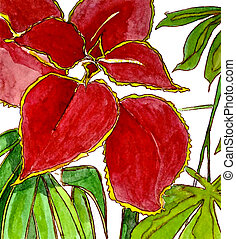 COLEUS - A close-up watercolor illustration of colorful...