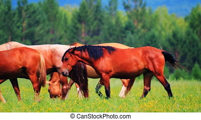 Horses grazing in the meadow