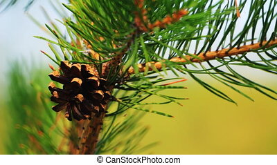 Close-up of pine cone and needles