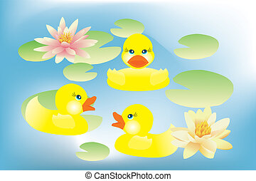 Ducklings swimming in lake with lotus flowers - Little cute...